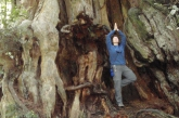 Jenny in Tree Pose (Vrikshasana) with arms overhead, hands in prayer position and with a slight backbend, at the base of a very big Western Red Cedar tree in Olympic National Park, Washington State (Photo by Ian Hatter).
