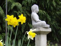 Spring Budda